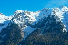 Paysage de montagne avec la forêt colorée et les crêtes couronnées de neige élevées jour étonnant de montagnes de Caucase du beau Photo stock