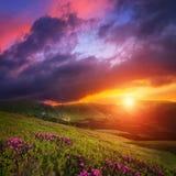 Paysage de montagne avec les fleurs roses de rhododendron Photos stock
