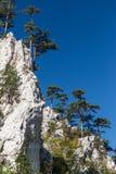 Paysage de montagne avec les pins noirs Images stock