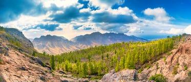 Paysage de montagne avec les pins verts image stock