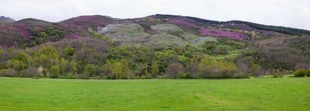 Paysage de montagne avec les prés et la végétation diverse Photo libre de droits