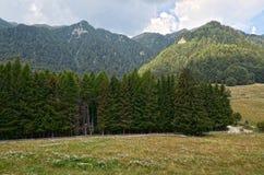 Paysage de montagne d'été Image libre de droits