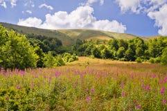 Paysage de montagne d'été avec la saule-herbe de fleurs dans le foregr image stock