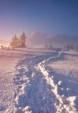 Paysage de montagne d'hiver avec le fotpath le matin neigeux Images libres de droits
