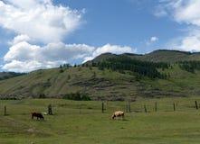 Paysage de montagne dans le secteur d'Ulagan de la République d'Altai photographie stock