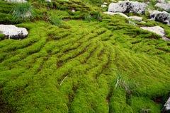 Paysage de montagne dans une mousse Images stock