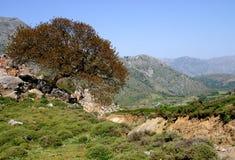 Paysage de montagne de Crète Images libres de droits