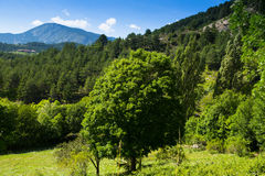Paysage de montagne de forêt dans le jour ensoleillé Image libre de droits