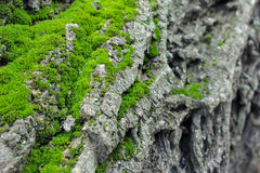 Paysage de montagne de mousse verte sur un arbre Images stock