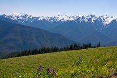 Paysage de montagne de Ridge d'ouragan, pré de fleur Images libres de droits