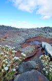 Paysage de montagne de stupéfaction Cedarberg Images libres de droits