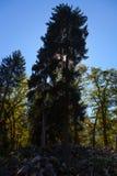 Paysage de montagne du Borjomi en Géorgie Photo stock