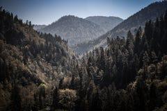 Paysage de montagne du Borjomi en Géorgie toned Image stock
