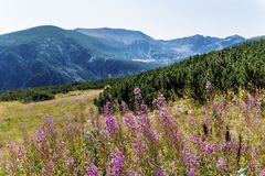 Paysage de montagne en Bulgarie Photo stock