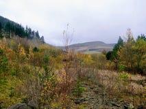 Paysage de montagne de Gallois des arbres et des buissons d'autume photo stock