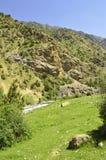 Paysage de montagne, gorge de Galuyan, Kirghizistan Photo libre de droits