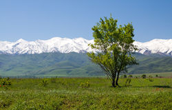 Paysage de montagne. Tokmok, Kirghizistan Photo stock