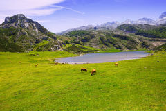 Paysage de montagnes avec le lac et le pâturage Images libres de droits