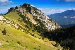 Paysage de montagnes de forêt Photo stock
