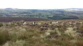 Paysage de montagnes de Wicklow image libre de droits