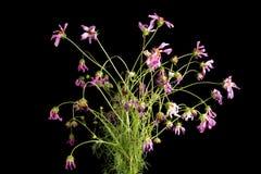 Paysage de mort de fleurs Image stock