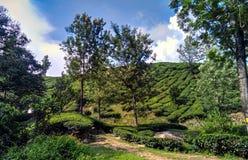 Paysage de Munnar Photographie stock libre de droits