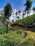 Paysage de Munnar Photographie stock