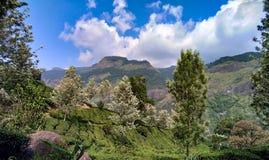 Paysage de Munnar Image stock
