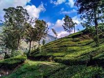 Paysage de Munnar Photo stock