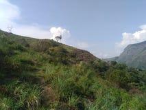 Paysage de Munnar Photos stock