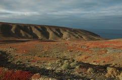 Paysage de nègre de Pozo Fuerteventura Îles Canaries l'espagne Images stock
