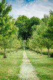 Paysage de nature avec des collines et des arbres et le chemin de marche photo stock