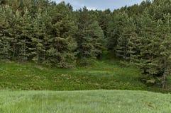 Paysage de nature de début de l'été avec la clairière verte, le wildflower parfumé de fleur et la forêt, montagne de Plana Photographie stock