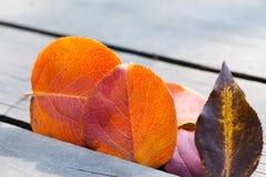 Paysage de nature de chute Feuilles colorées de tremble d'automne Photo stock
