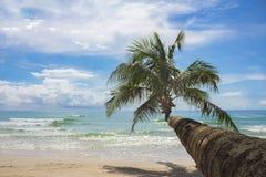 Paysage de nature de paysage d'arbre de noix de coco sur l'île en Thaïlande Photos stock