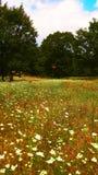 Paysage de nature, fleurs colorées Image stock