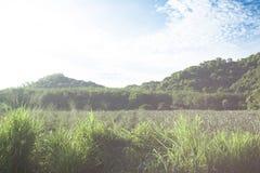 Paysage de nature le matin images libres de droits