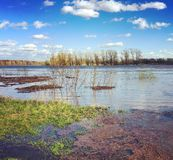 Paysage de nature de ressort avec des bois d'arbres se tenant dans l'eau pendant une inondation de ressort Beau paysage de ressor images libres de droits