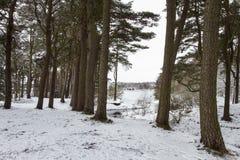 Paysage de neige images stock
