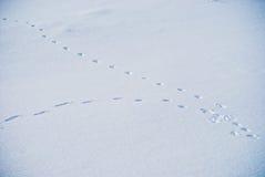 Paysage de neige Images libres de droits