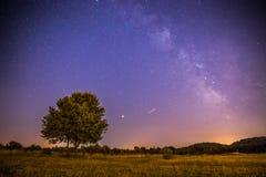 Paysage de nuit : Étoiles, pré et un arbre Tons pourpres et chauds image stock