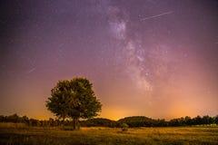 Paysage de nuit : Étoiles, pré et un arbre Tons pourpres et chauds images stock
