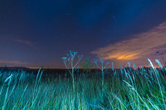 Paysage de nuit avec des herbes, des étoiles et des nuages images libres de droits