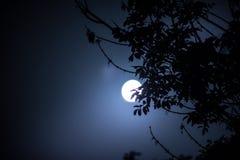 Paysage de nuit de ciel et de lune superbe avec le clair de lune lumineux derrière la silhouette de la branche d'arbre Fond de na images stock