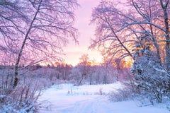 Paysage de nuit d'hiver avec le coucher du soleil dans la forêt Image stock