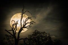 Paysage de nuit de ciel avec la lune superbe lumineuse derrière la silhouette photos libres de droits