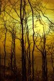 Paysage de nuit de ciel avec la lune superbe lumineuse derrière la silhouette image libre de droits