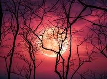 Paysage de nuit de ciel avec la lune superbe lumineuse derrière la silhouette photographie stock