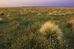 Paysage de Pampas, Images stock