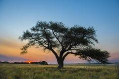 Paysage de Pampas, Image libre de droits